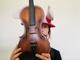 Aurora Bowers's Fiddle School