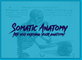 Somatic Anatomy