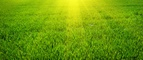 How To Start & Grow A Profitable Lawn & Landscape Business