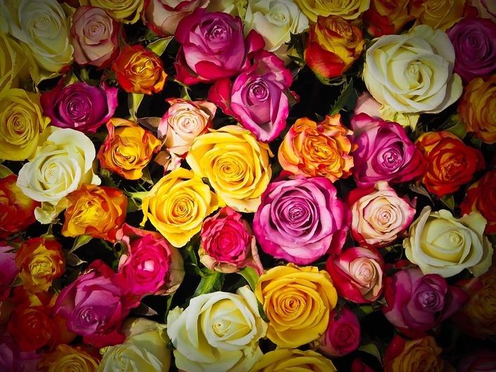 Dopqzctrtz607hcpngky roses 1229148 960 720