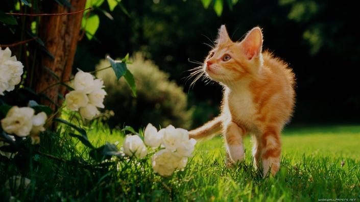 Rlxmu3wmt6avzsqlzehh bg kitty