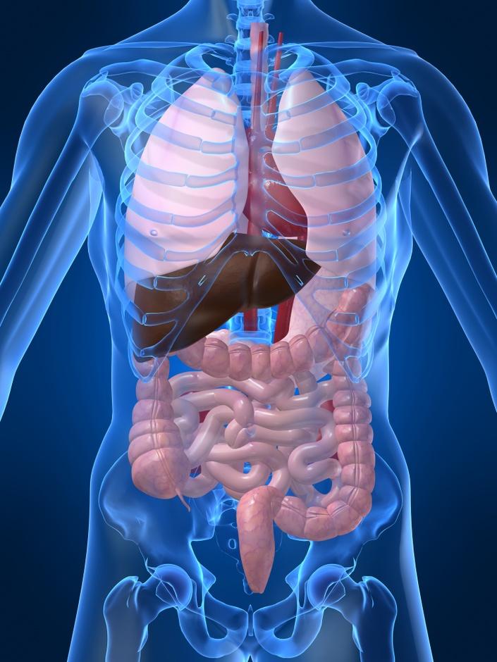 Sgp5mltcqdeh4zpkln6m anatomy of human body