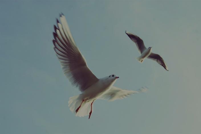 Y1wdjgmtmulqm4mcvxwq bg birds