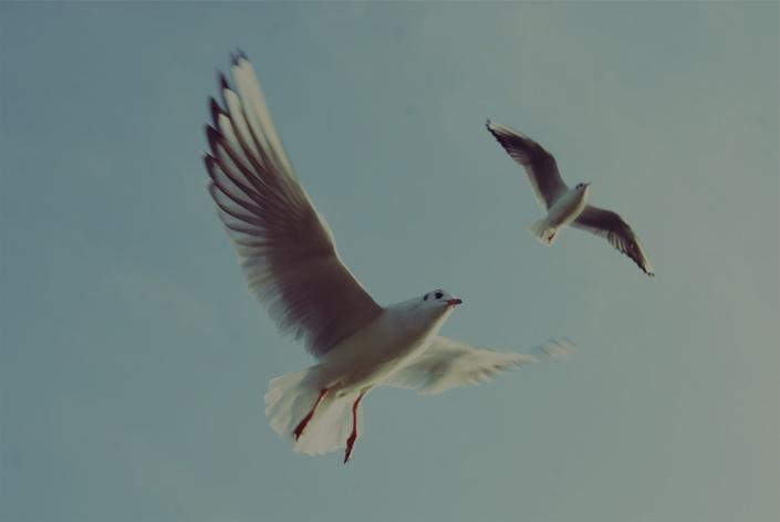 Pkc1lgutsbmuihrvyhvd bg birds