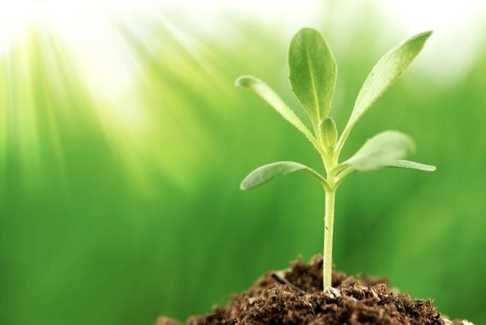 Qaxrgkattaakhjgugqna image%20 %20young%20plant%20growing