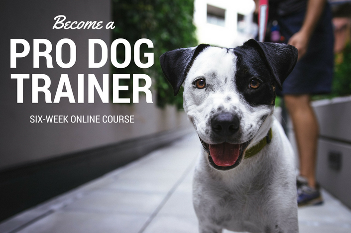become a pro dog trainer | train canine