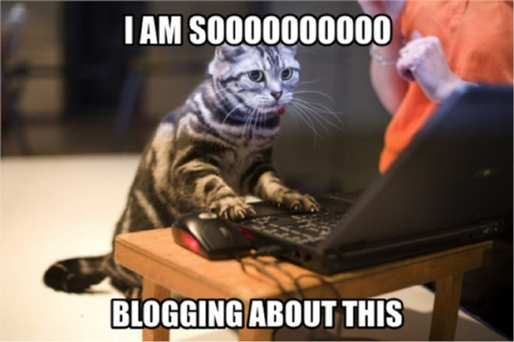8 Things No Blogger Will Tell You About Blogging
